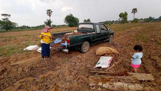 โครงการปลูกผักสวนครัว ปีงบประมาณ 2564